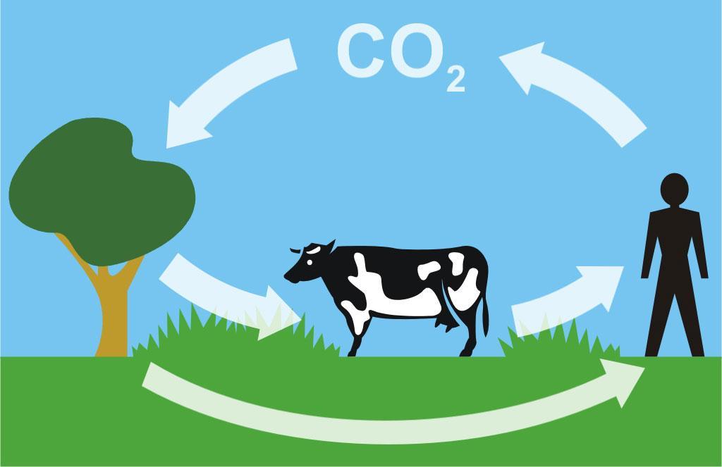 Cykl węglowy