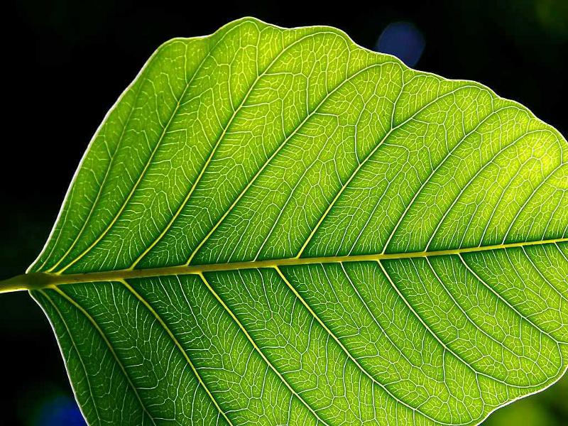 Zdjęcie przedstawia fragment liścia.