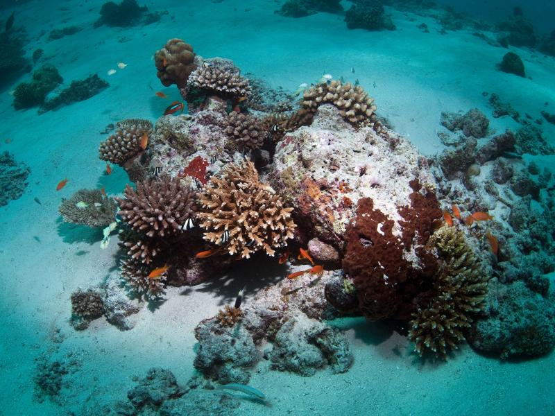 Rafa koralowa