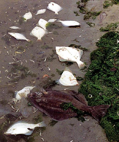 Zdjęcie przedstawia gragment wybrzeża, na którym widoczne są wyrzucone na brzeg martwe ryby