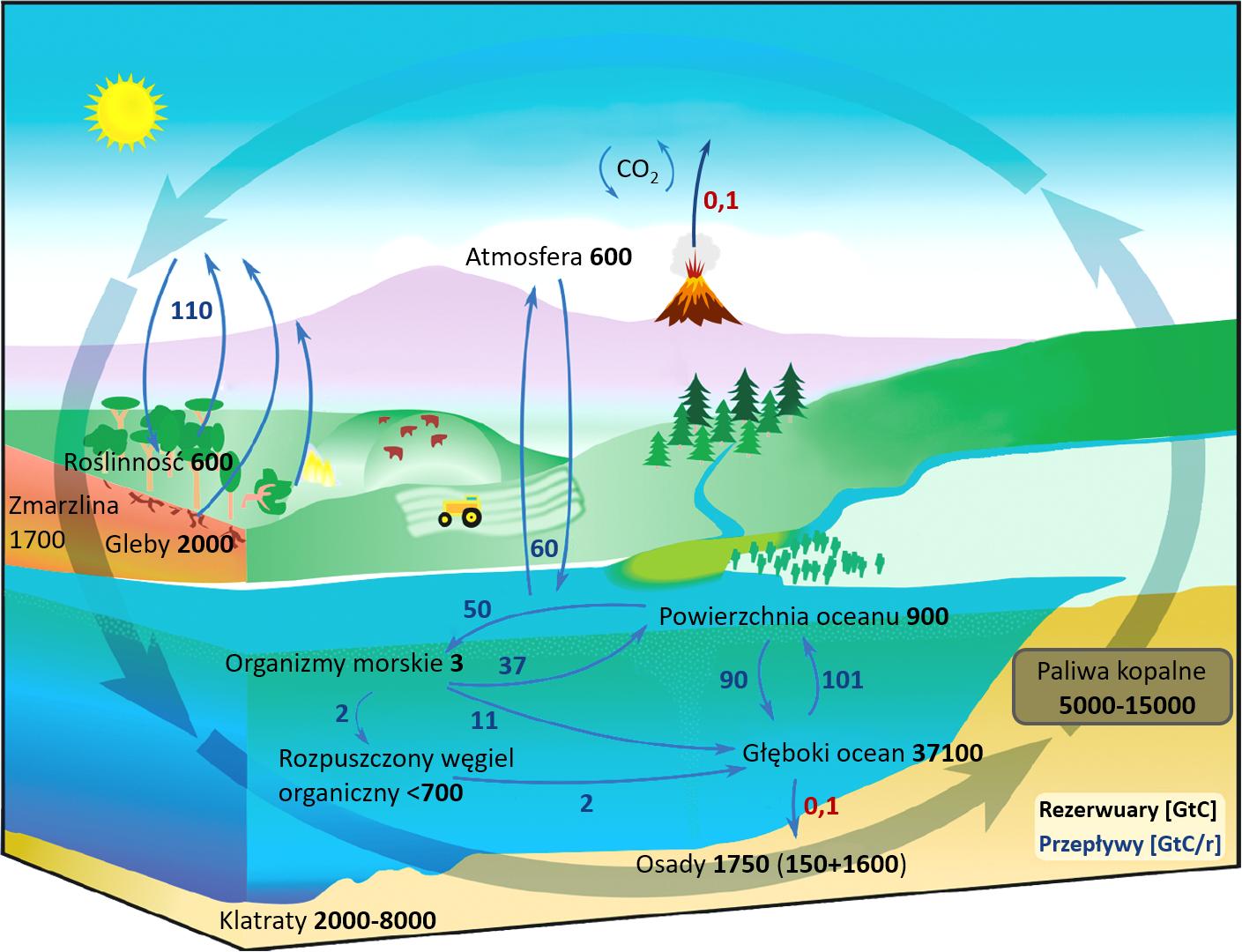 Krążenie węgla w systemie klimatycznym Ziemi - Klimat Ziemi