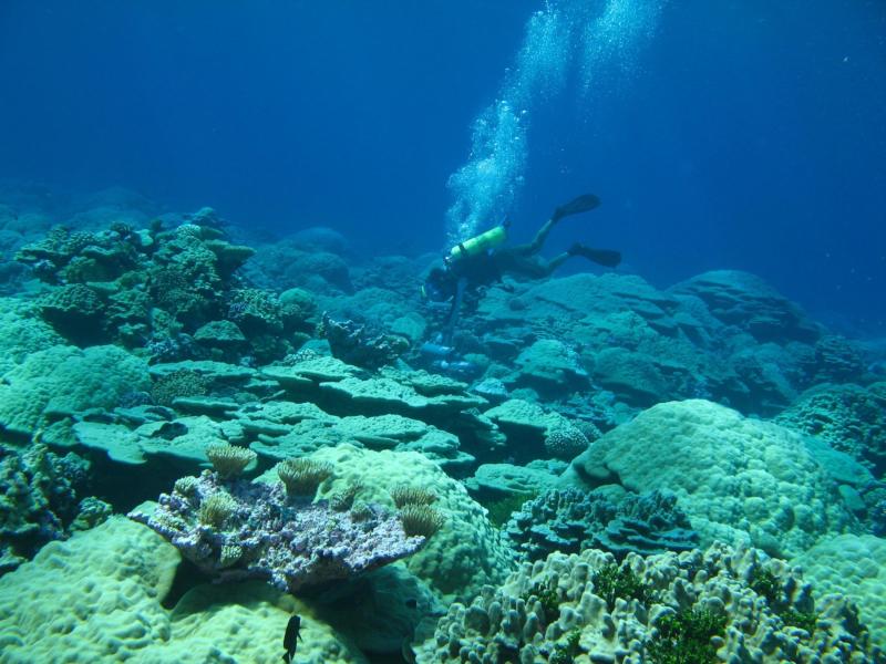 Szybki cykl węglowy, część 2: węgiel w oceanach ...