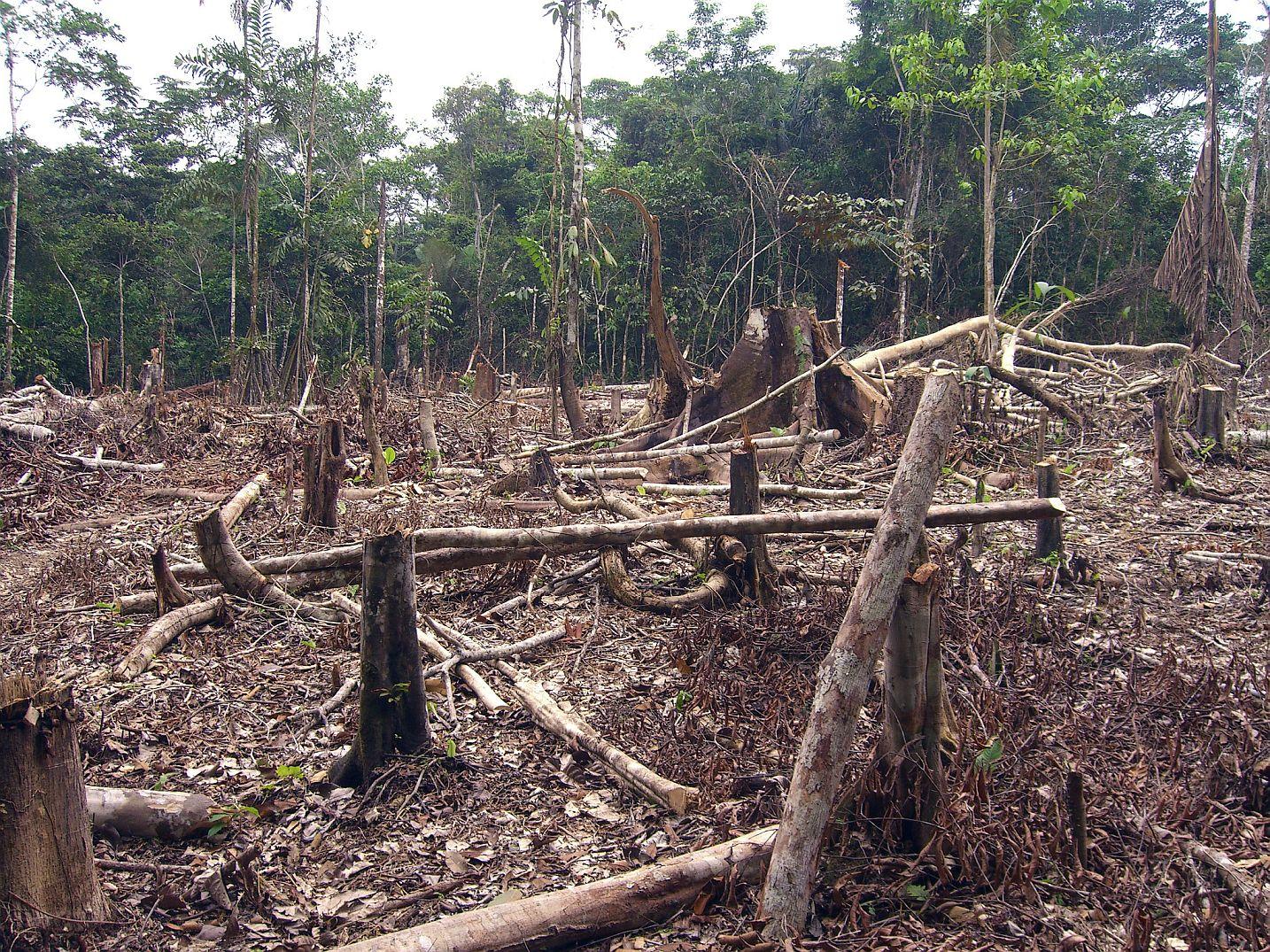 Wylesianie w Amazonii-2020