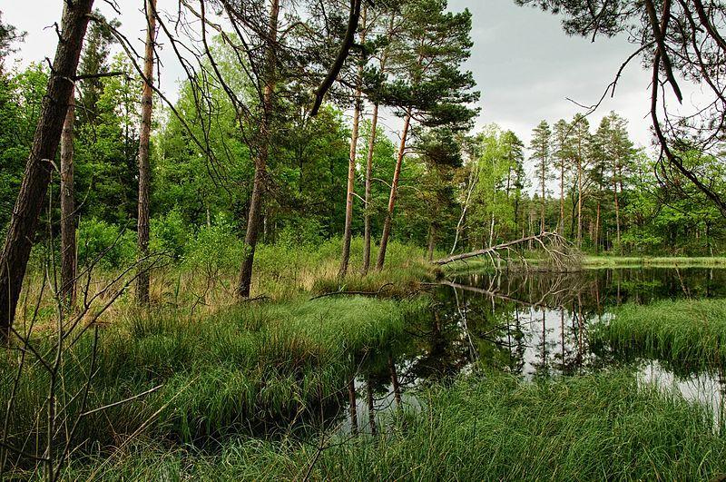 Torfowisko: stojąca woda, trawy, trochę drzew.