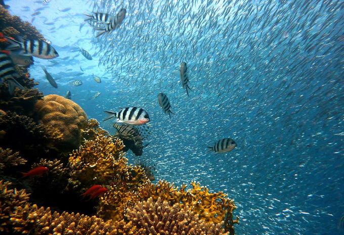 Ekosystem zagrożony zmianą klimatu: rafa koralowa i różne gatunki ryb