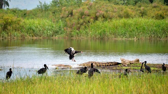 Zwierzęta nad jeziorem w parku narodowym Akagera w Rwandzie