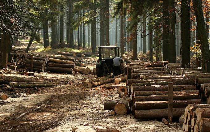 Zdjęcie: zrywka drewna w lesie gospodarczym.