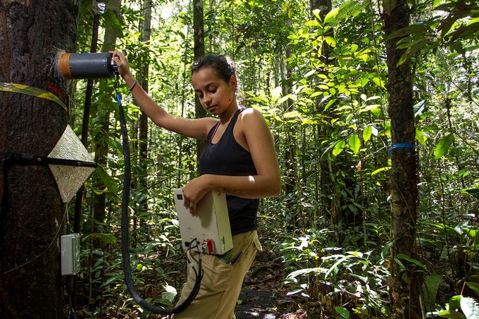 Zdjęcie: pomiary w ramach projektu FACE. Środek lasu, badaczka przykłada czujnik do drzewa, w drugim ręku ma urządzenie rejestrujące sygnał, połączone przewodami z czujnikiem.