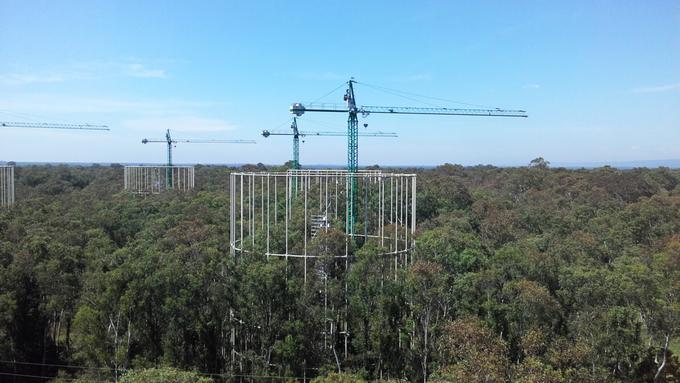 Zdjęcie: eksperyent FACE. Spojrzenie na las: widać korony drzew, spomiędzy krórych wystają żurawie budowlane i ażurowe konstrukcje wież pomiarowych.