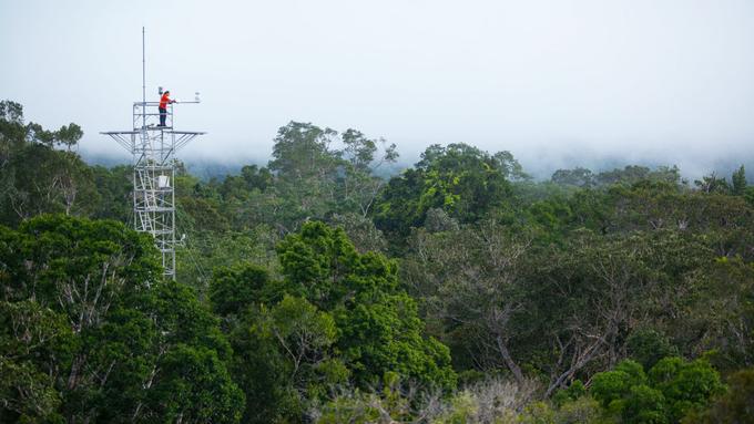 Zdjęcie: eksperyment FACE. Korony drzew, spomiędzy których wystaje ażurowa wieża pomiarowa, na wieży osoba.