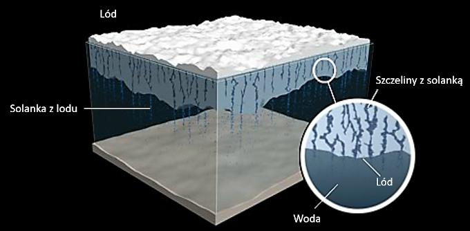 Schemat wytrącania się soli z powstającego lodu morskiego. W płacie lodu widać kanaliki, którymi solanka stopniowo spływa w dół, do wody.