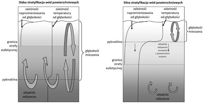 Schematy: słaba i silna stratyfikacja wód oceanicznych i jej znaczenie dla mieszania warstw