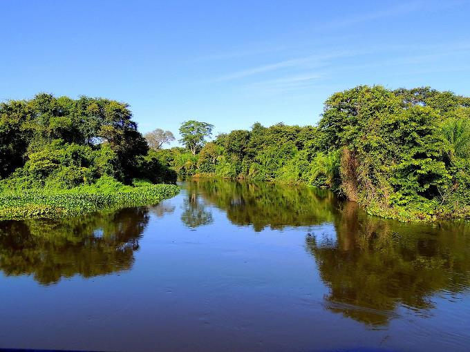 Zdjęcie: Pantanal. Fragment rzeki otoczony bujną, wielopiętrową roślinnością