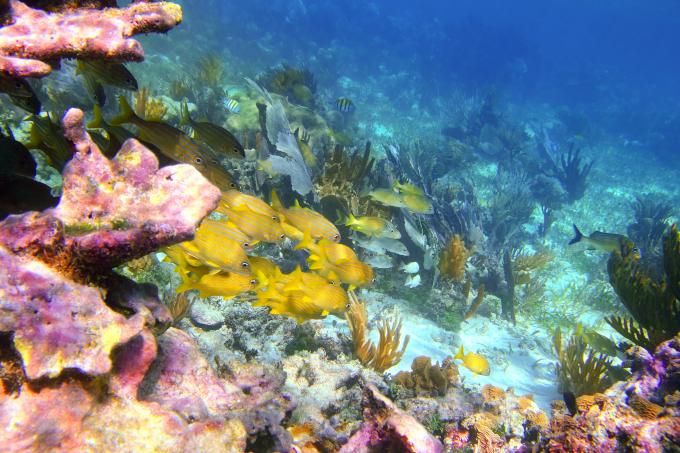 Zdjęcie: rafa koralowa. Widać dno oceanu pokryte kolorowymi kształtami koralowców, drobne rybki w różnych kolorach