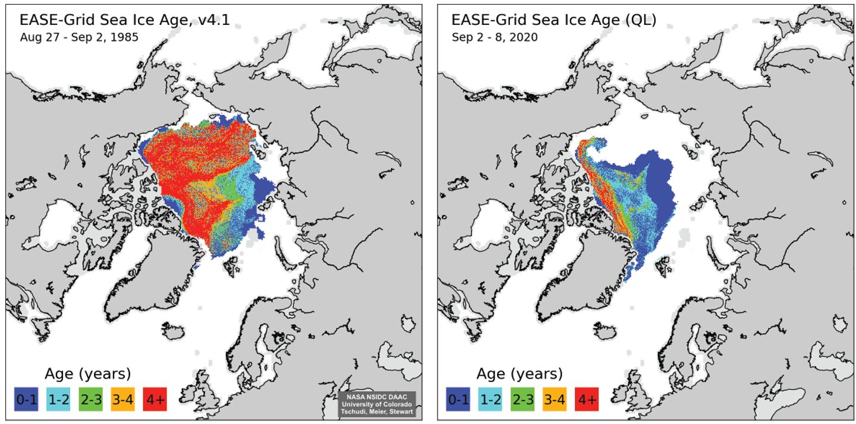 Mapy pokazujące wiek lodu w poszczególnych częściach Arktyki, 1985 i 2020.