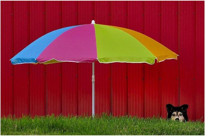Zdjęcie: upalny dzień. Na pierwszym planie kolorowy parasol od Słońca na tle ściany, w prawym dolnym rogu pies chowający się przed słońcem.