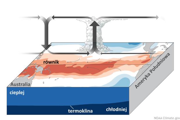 Schemat cyrkulacji nad Oceanem Spokojnym, faza El Niño