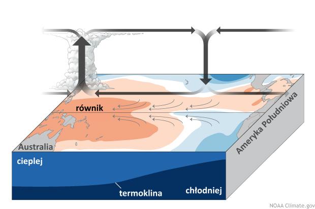 Schemat cyrkulacji nad Oceanem Spokojnym, neutralna faza ENSO