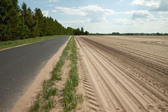 Zdjęcie: erozja wiatrowa. Od lewej: rząd drzew, jezdnia i trawiaste pobocze częściowo pokryte piaskiem, piaszczysty ugór.