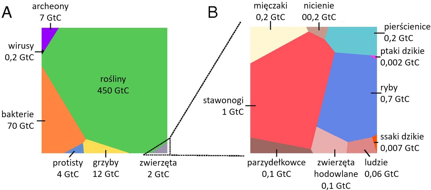 Schemat: podział biomasy pomiędzy poszczególne taksony, największą część stanowią rośliny.