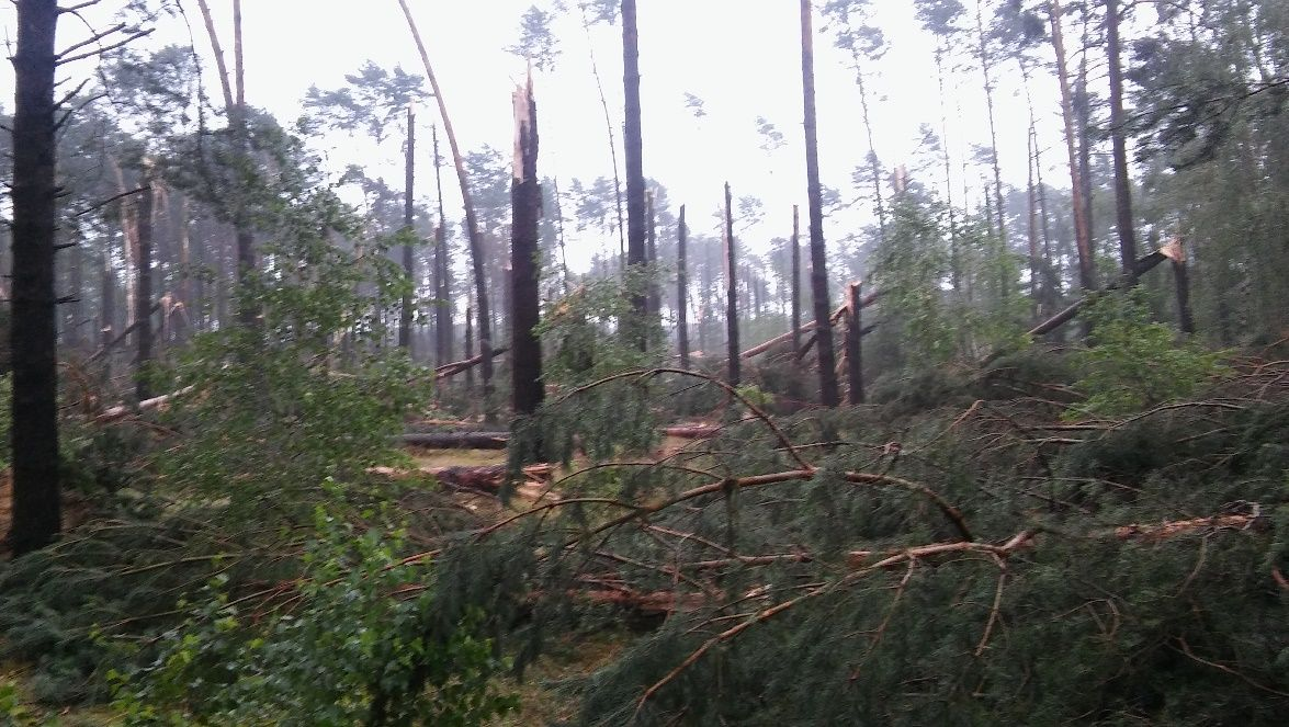 Zdjęcie: Bory Tucholskie po nawałnicy, widoczne połamane drzewa.