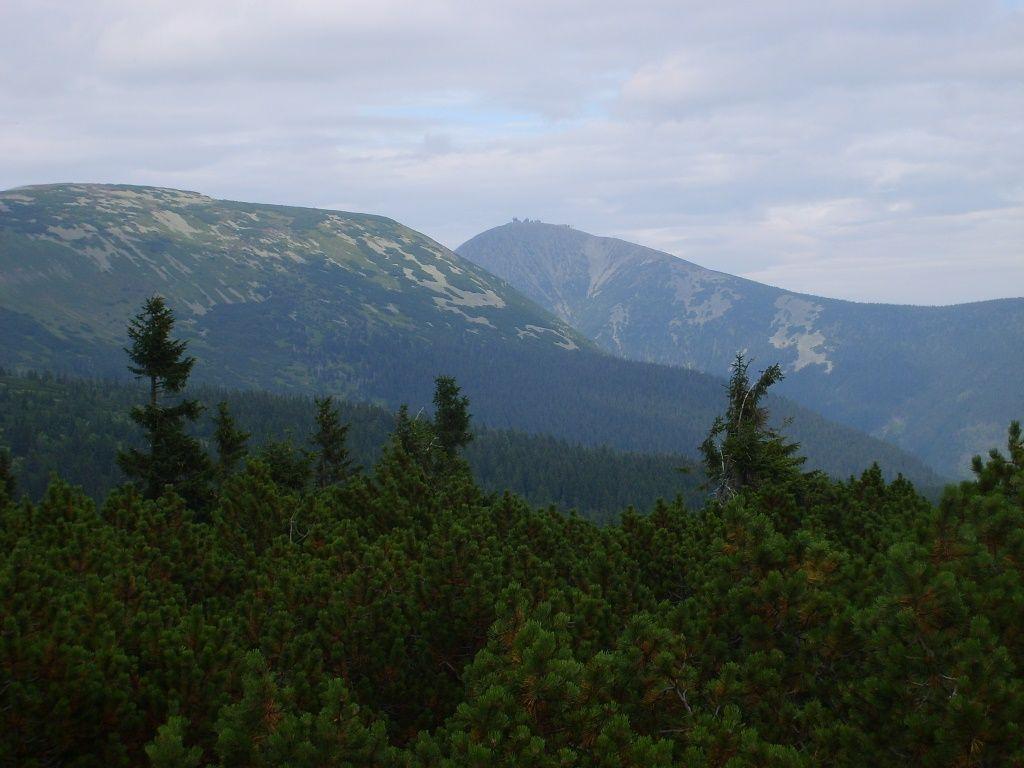 Zdjęcie: krajobraz górski, na pierwszym planie roślinność iglasta