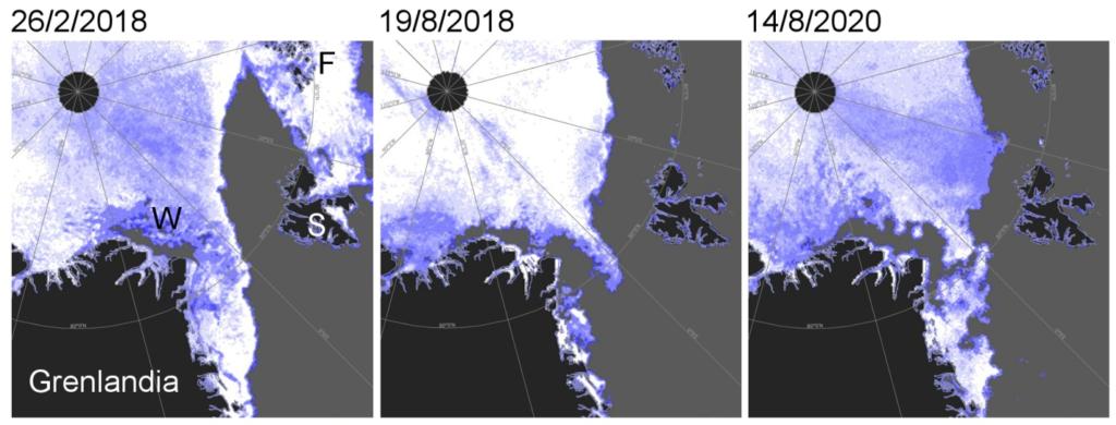 Zestaw map pokazujących koncentrację lodu morskiego w Arktyce, obejmujących m.in. Morze Wandela.